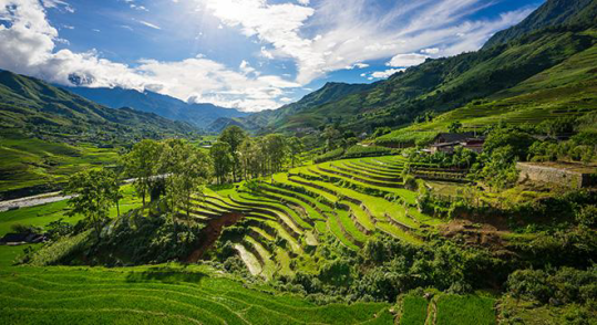 vietnam-rice-terraces-peregrine